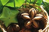 Inca inchi seed cultivated in Peru