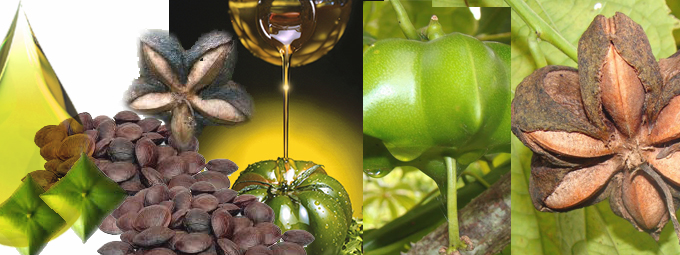 Bandeau huile vierge Inca Inchi