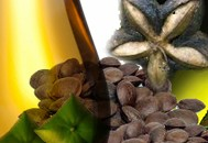 Perles en Gascogne virgin Inca Inchi oil