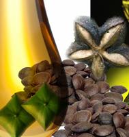 huile vierge inca Inchi Perles en Gascogne