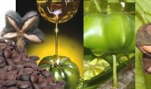 Huile végétale naturelle Inca Inchi Perles de Gascogne