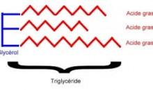 Schéma d'un triglycéride